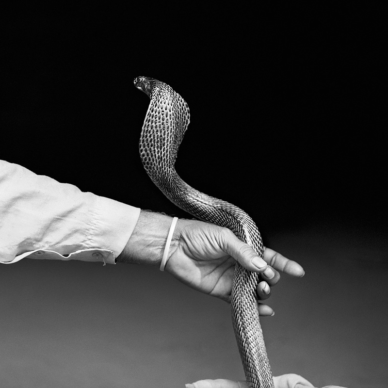 © Christine Turnauer – Sukhbir Nath's cobra, India, 2015